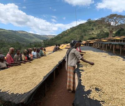 Kaffee wird in der Aufbereitung bei der Kaffeeproduktion getrocknet